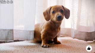 cute baby and cute puppy video