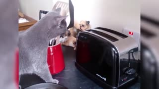 Funny video cats getting scared