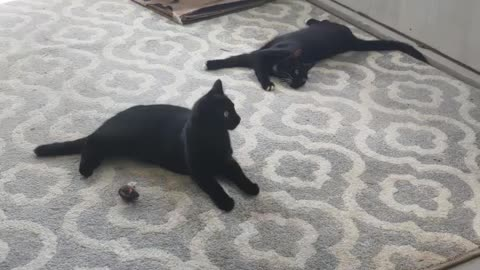 Kitties 2