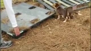 Best funny Dogs video 2021