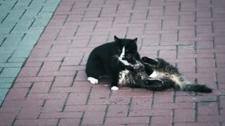Play cute cats together
