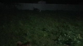 My Dogs Playing
