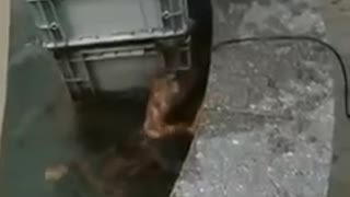 The dog who rescued the cat from drowning