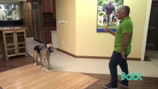 Aggressive German Shepard dogs