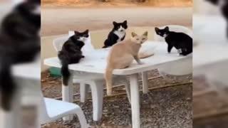 Animal funny behavior collection