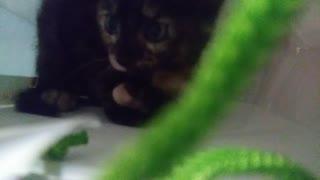 Cute cat named sushi