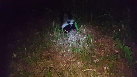 Skunk Acts Tough