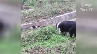 Fun Cats and Dogs Compilation