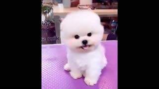 😍 Cute Baby Dogs – Lindos perritos bebes 😍 New Video 1