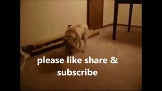 Dreaming Dog Running