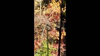 Woodpeckers Summer 2020 Shenandoah Valley, West Virginia