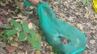 Mission Animal Rescue - rescue animals with nature 3