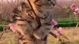 kittens kitten