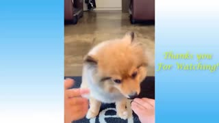 Funny Pets Reactions Compilation