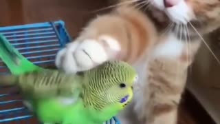 Adorable Cat Plays With A Bird