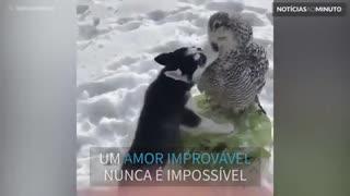 A história de amor entre um cão e uma coruja