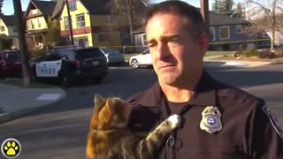Cat jumps at police officer during interview