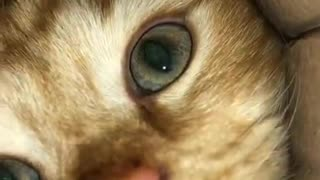 Funny animal clip cat trying to reach camera