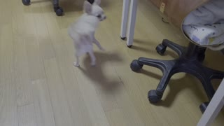 a dog spinning round and round