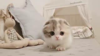 Cat Very Cute!!