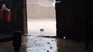 morning rainfall
