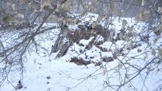 Where dioes Sasquatch Go Wintertime