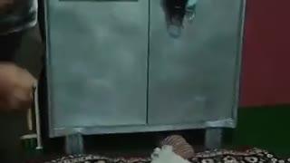 Funny video in lockdown
