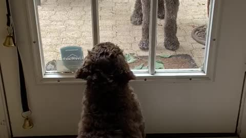 Puppy wants to let sister inside the house.