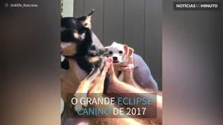 Cães ensinam o que acontece durante o eclipse solar