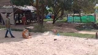 Prank fake tiger video