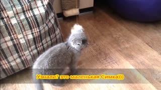 cute kittens, have fun, very cute