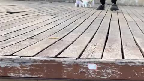 Cute puppy playing funny