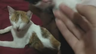 Cute Kitten Plays a Great Game