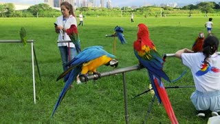 Trained parrot show at outdoor