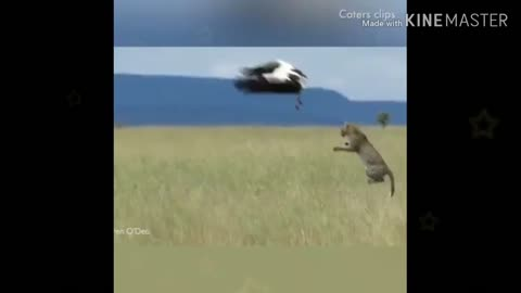 Most viral videos wild animals hunting 2021