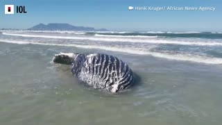Whale washes up on Cape Town beach