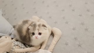 Videos of cute kittens playing, you will want a kitten like that - 2021