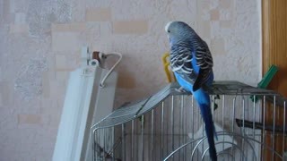 Such a cute talking parrot