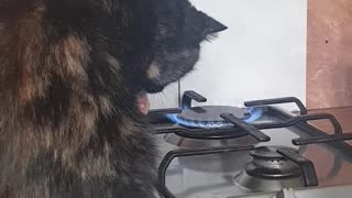the cat prepares its paw for lunch