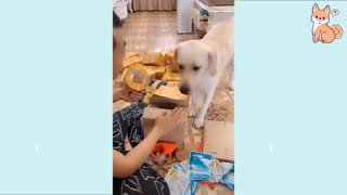 Cute Funny Puppies Compilationn