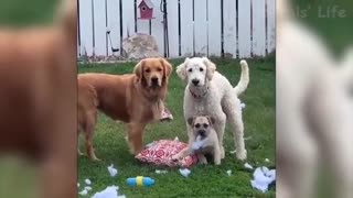 Watch these Dogs go crazy! Very Funny