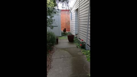 Ridgeback Mr Brown Shows You Aussie Pet Friendly Accommodation
