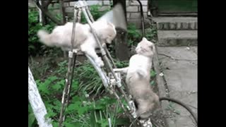 crazy cat video funny