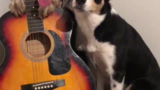 Musical Doggos Play the Guitar