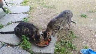 eat together