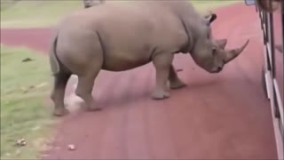 Crazy wild animals reacts with humans