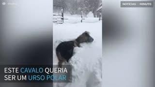 Cavalo se diverte brincando na neve