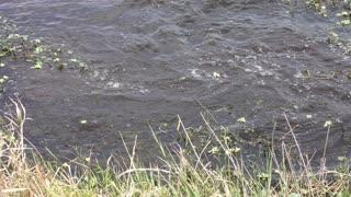 large alligator jumped after bird