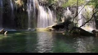 Video nature 2021