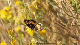 Beautiful yellow butterfly worthy of the beauty of nature
